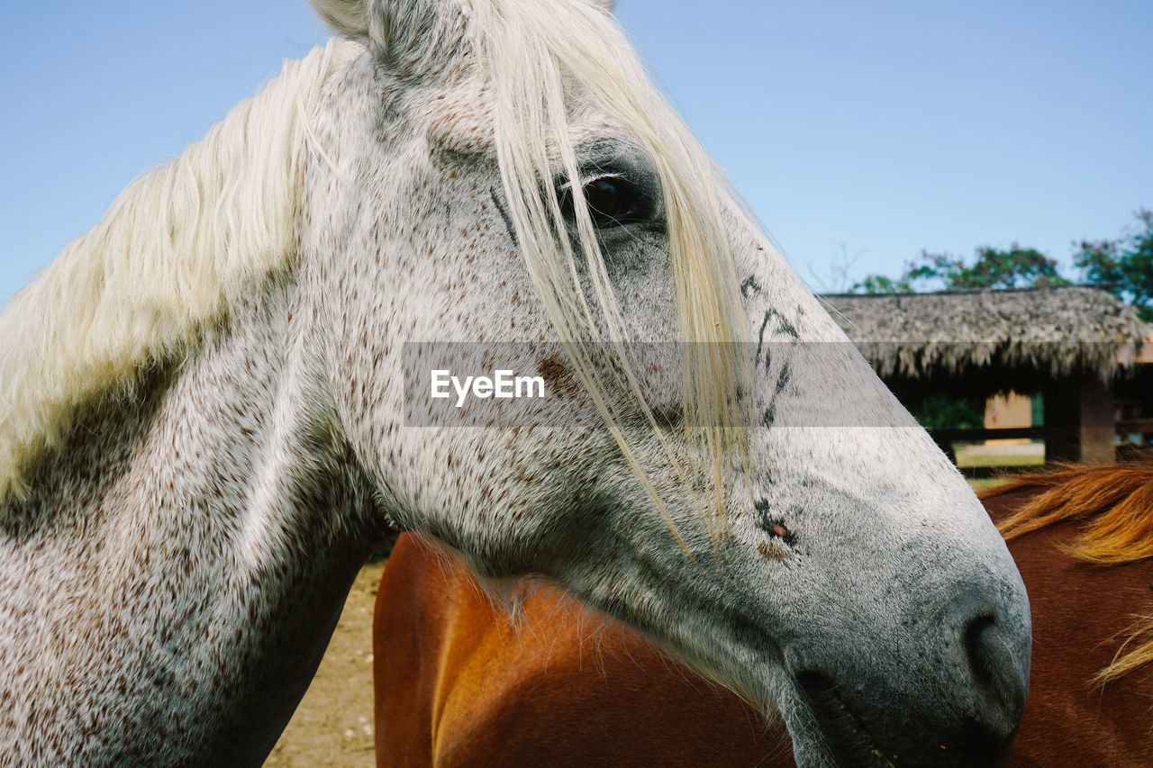 CLOSE-UP OF HORSE HEAD ON FIELD