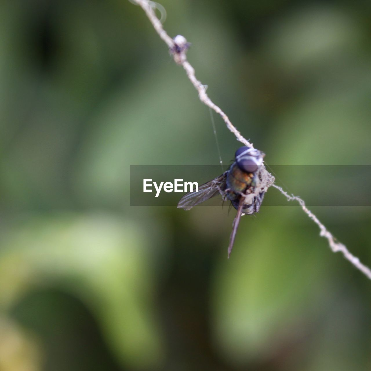 one animal, animals in the wild, animal themes, animal, animal wildlife, insect, invertebrate, day, close-up, selective focus, plant, no people, focus on foreground, nature, outdoors, beauty in nature, green color, fragility, animal wing, zoology