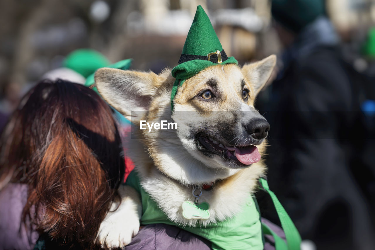 mammal, one animal, domestic animals, animal themes, pets, dog, animal, domestic, canine, vertebrate, focus on foreground, looking away, close-up, incidental people, day, looking, portrait, selective focus, outdoors, mouth open, animal head, warm clothing