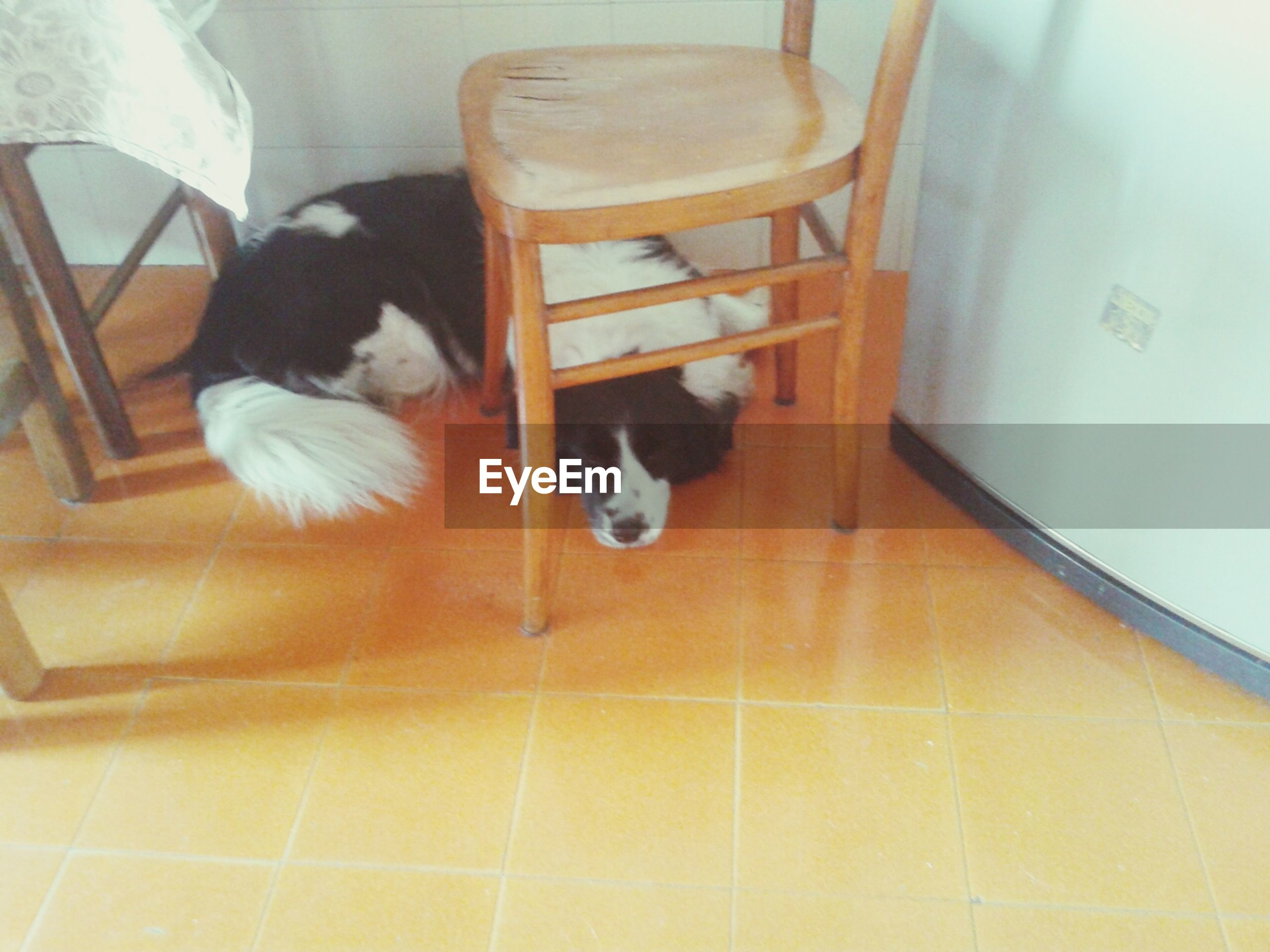 indoors, tiled floor, flooring, high angle view, animal themes, floor, pets, domestic animals, one animal, tile, chair, relaxation, home interior, hardwood floor, no people, domestic cat, sitting, cat, table, wood - material