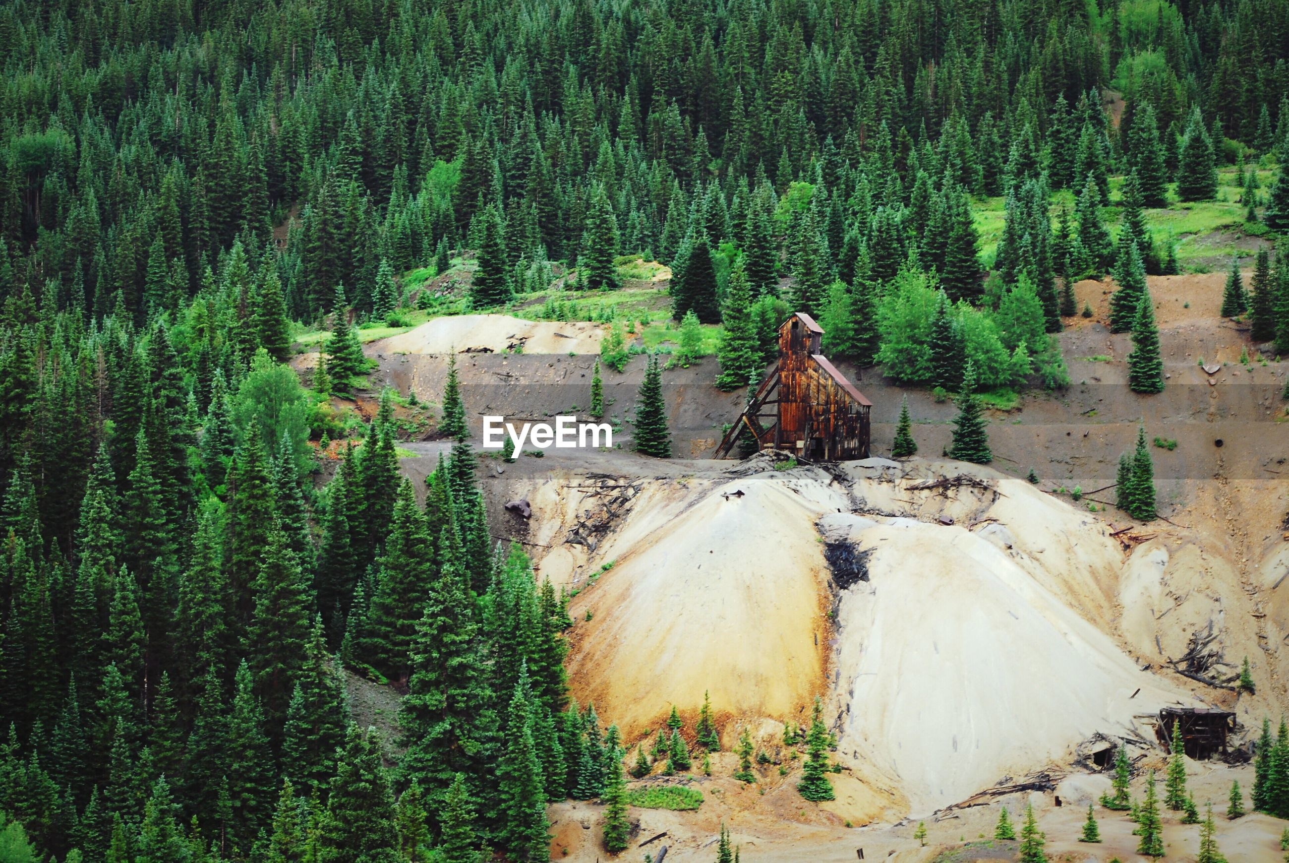 High angle view of goldmine in forest