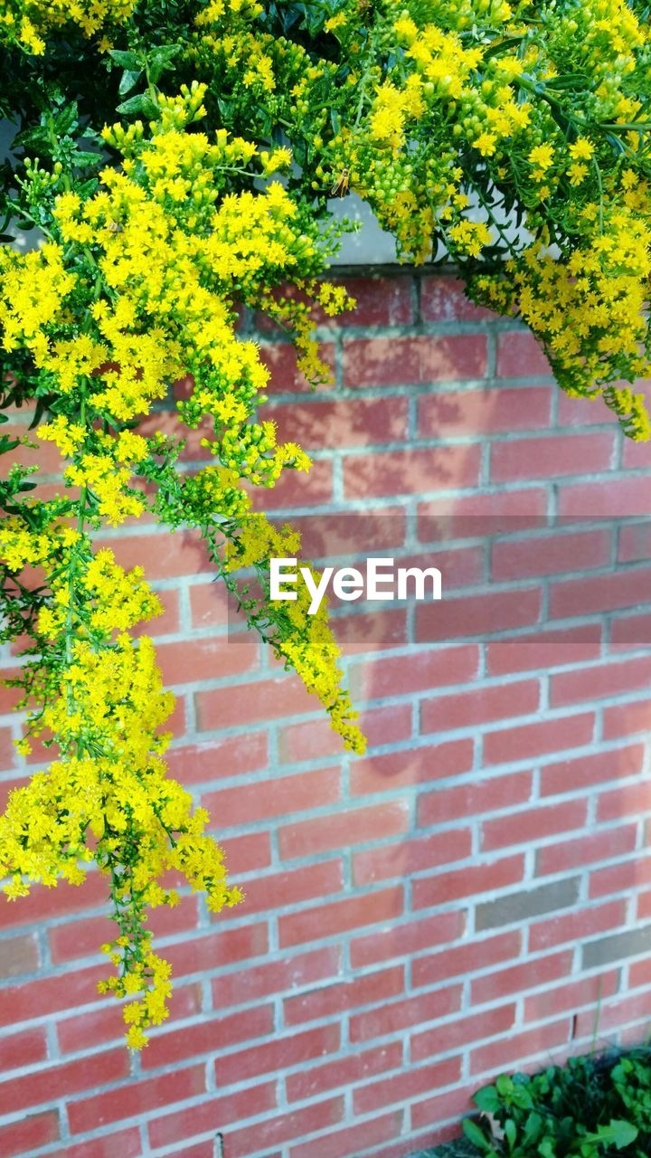 growth, brick wall, plant, ivy, green, building exterior, tree, architecture, green color, leaf, nature, built structure, outdoors, yellow, day, no people, close-up