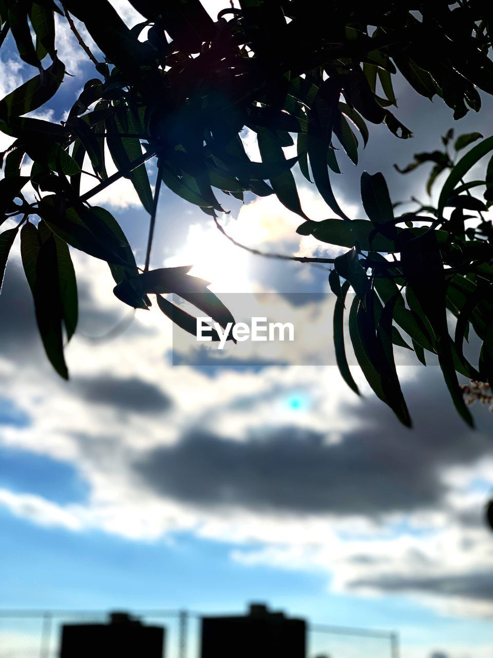 plant, sky, growth, tree, cloud - sky, plant part, leaf, beauty in nature, nature, low angle view, no people, branch, outdoors, day, close-up, tranquility, sunlight, silhouette, freshness, selective focus