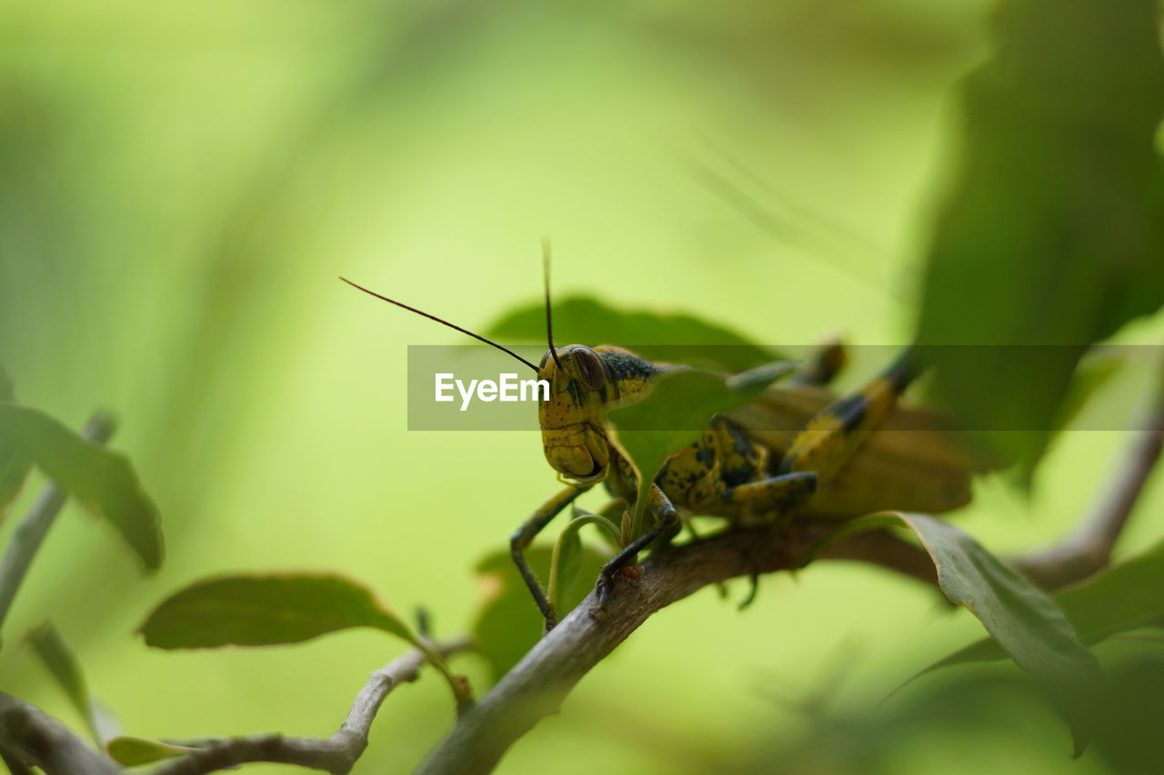 animal, one animal, animal themes, animal wildlife, animals in the wild, invertebrate, insect, green color, close-up, plant, selective focus, animal antenna, animal body part, day, plant part, nature, no people, leaf, focus on foreground, outdoors, animal eye