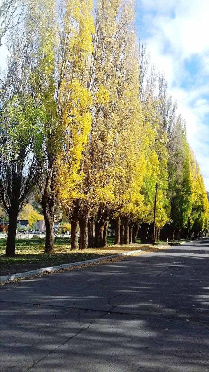 tree, road, autumn, outdoors, nature, day, transportation, tranquil scene, tranquility, yellow, sky, beauty in nature, street, no people, scenics, growth, landscape