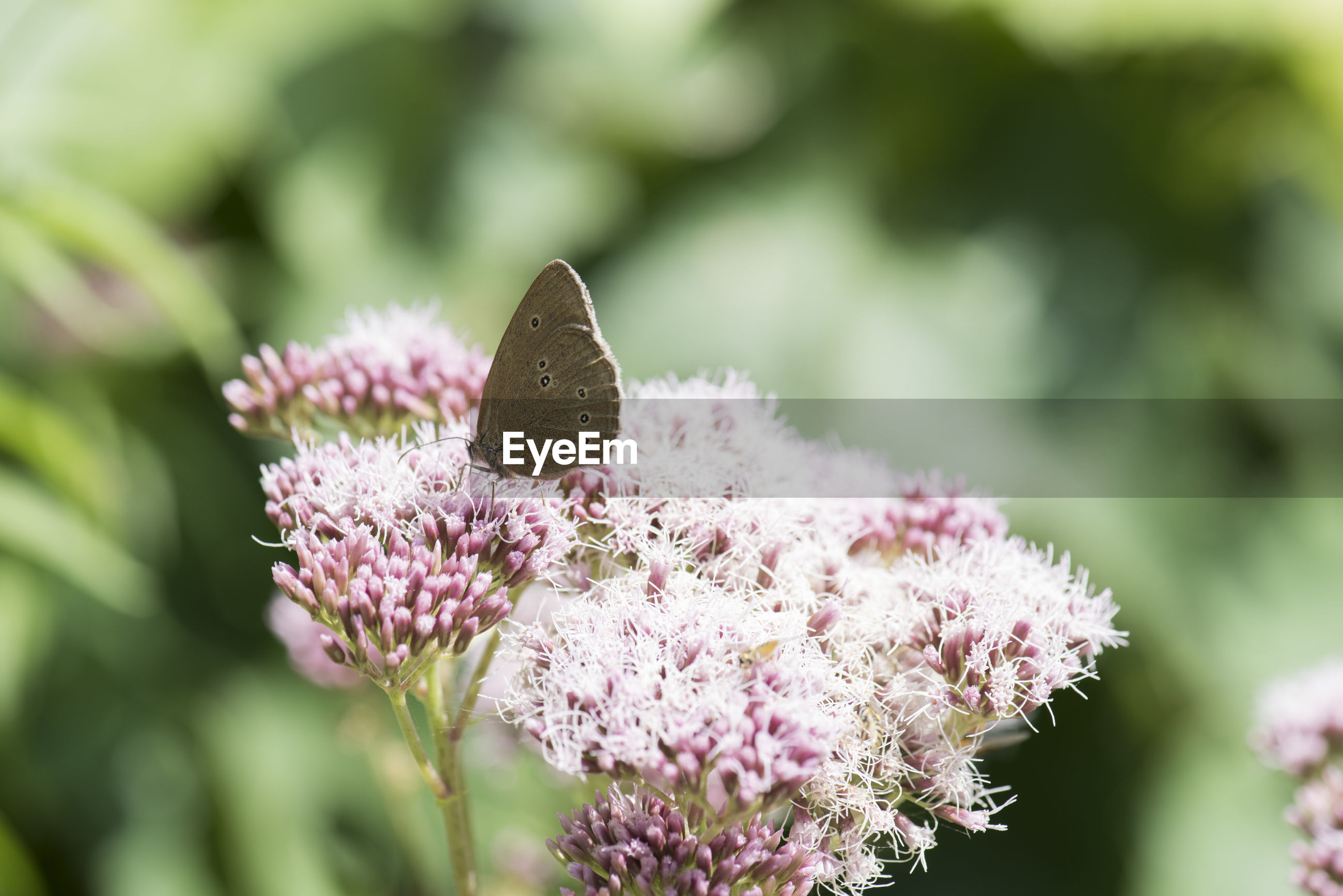 Close-up of butterfly on purple flowers growing outdoors