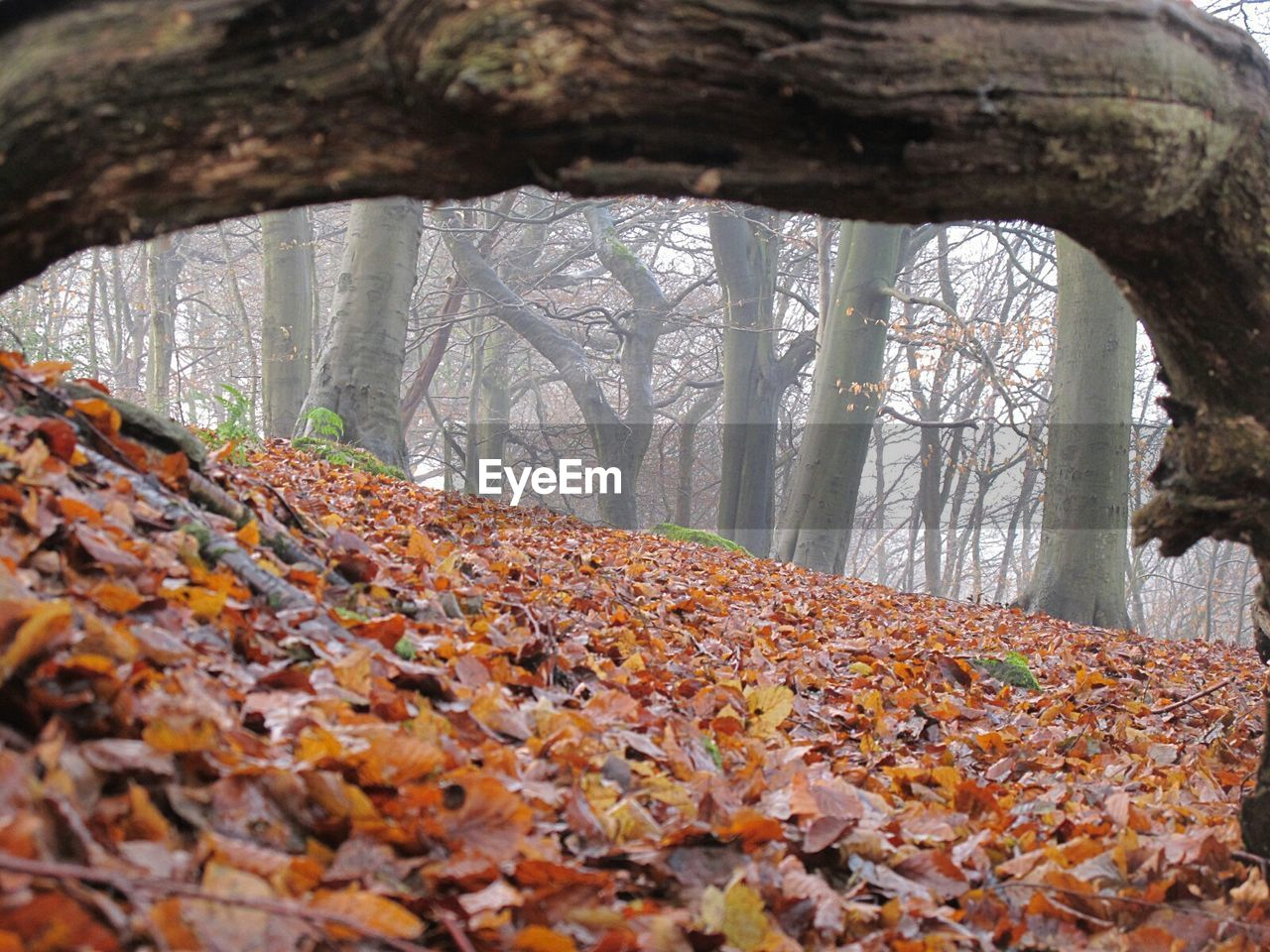autumn, leaf, change, nature, forest, tree, day, beauty in nature, outdoors, no people, tree trunk, scenics, tranquility, branch, the way forward, close-up