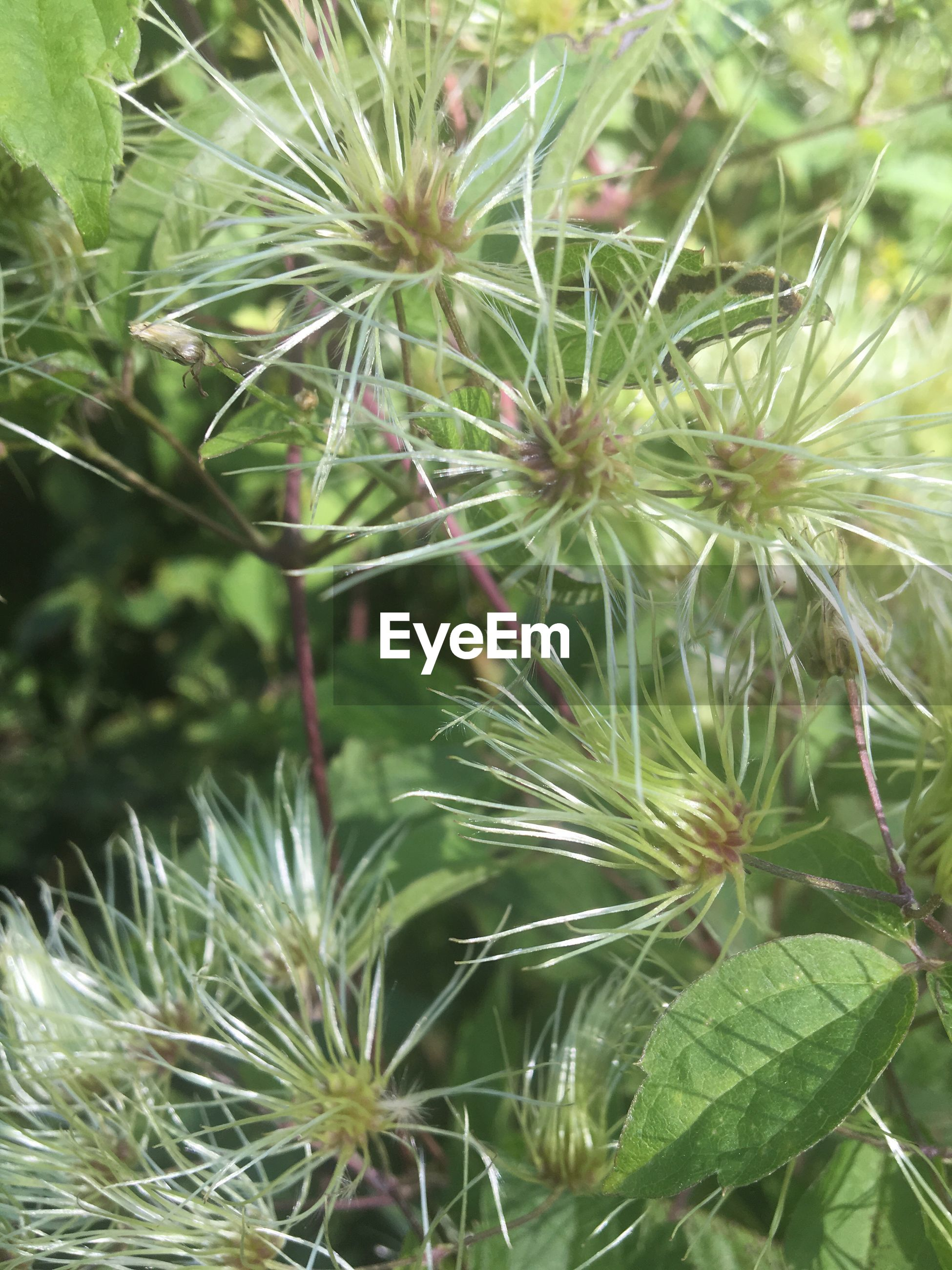 plant, growth, close-up, thorn, cactus, spiked, nature, freshness, fragility, sharp, beauty in nature, focus on foreground, flower, green color, selective focus, day, green, botany, needle - plant part, spiky, wildflower, uncultivated, outdoors, growing, flower head, springtime, softness, in bloom