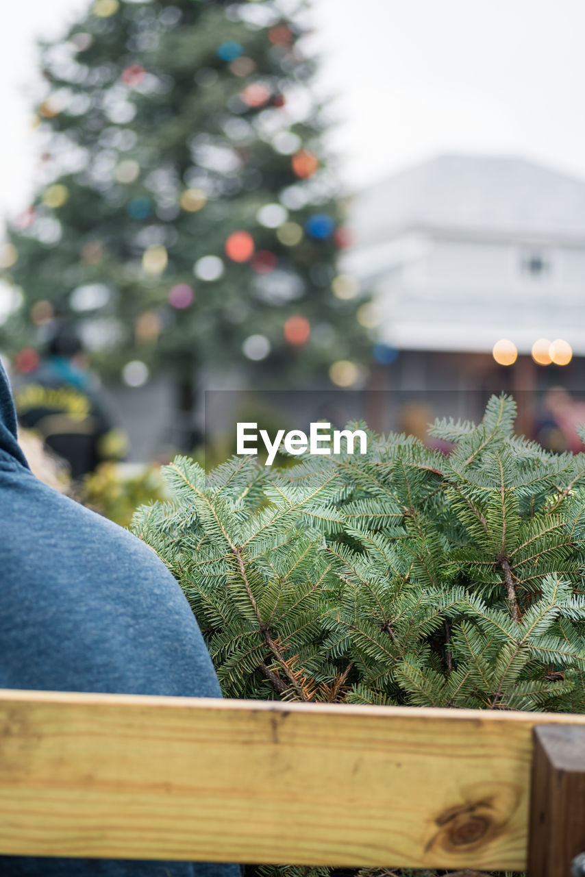 CLOSE-UP OF CHRISTMAS TREE WITH PLANT