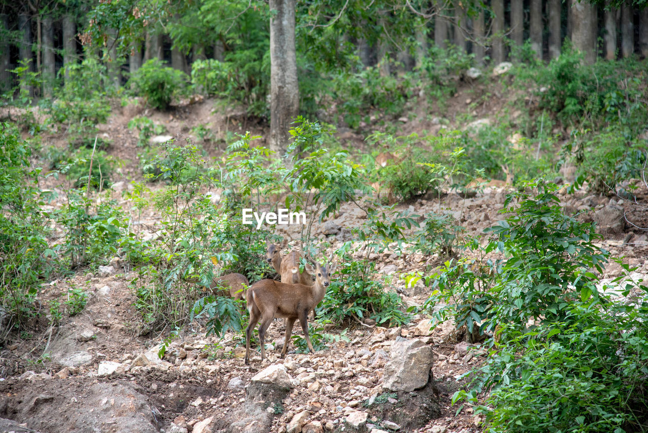 mammal, animal themes, animal, plant, tree, one animal, animal wildlife, animals in the wild, no people, vertebrate, forest, nature, land, day, full length, young animal, domestic animals, environment, landscape, outdoors