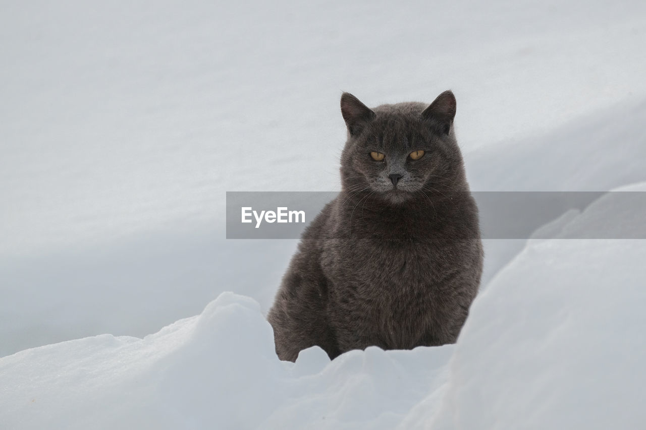 Close-Up Of Cat Siting On Snow