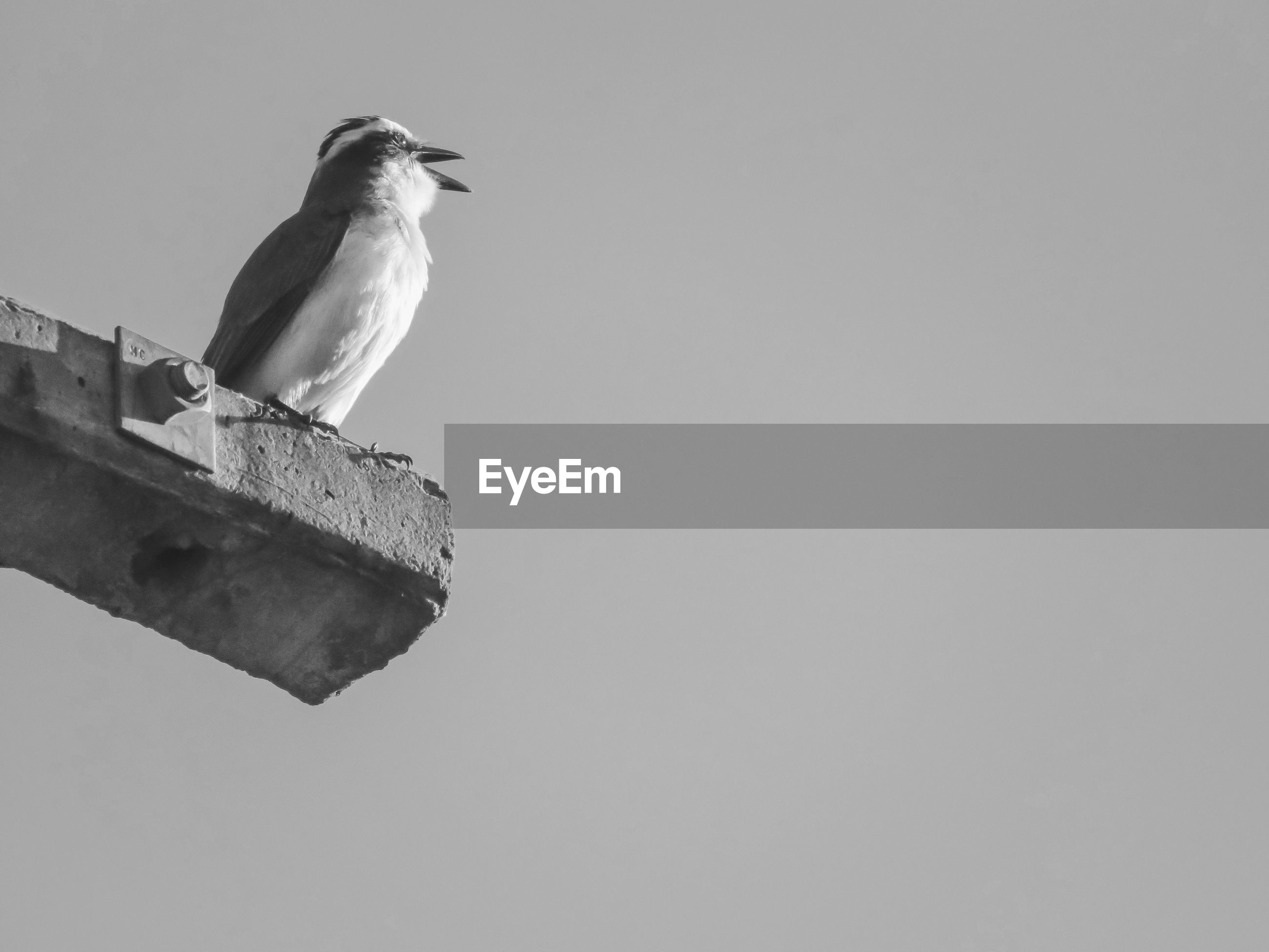 LOW ANGLE VIEW OF BIRD PERCHING ON WOOD AGAINST CLEAR SKY