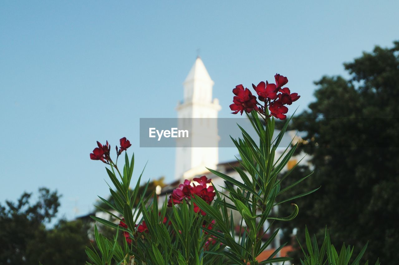 Low Angle View Of Red Flowers Against Church