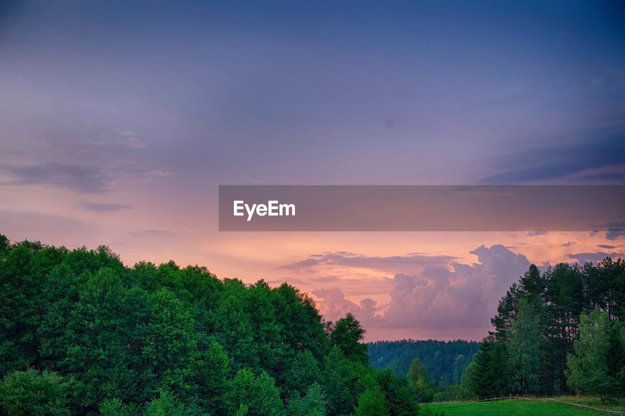 TREES IN FOREST AGAINST SKY DURING SUNSET