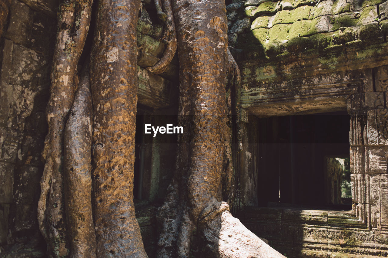 Old Tree By Building