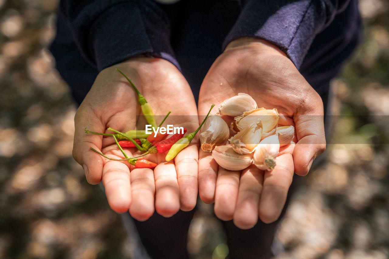 Close-up of hand holding chili and garlic