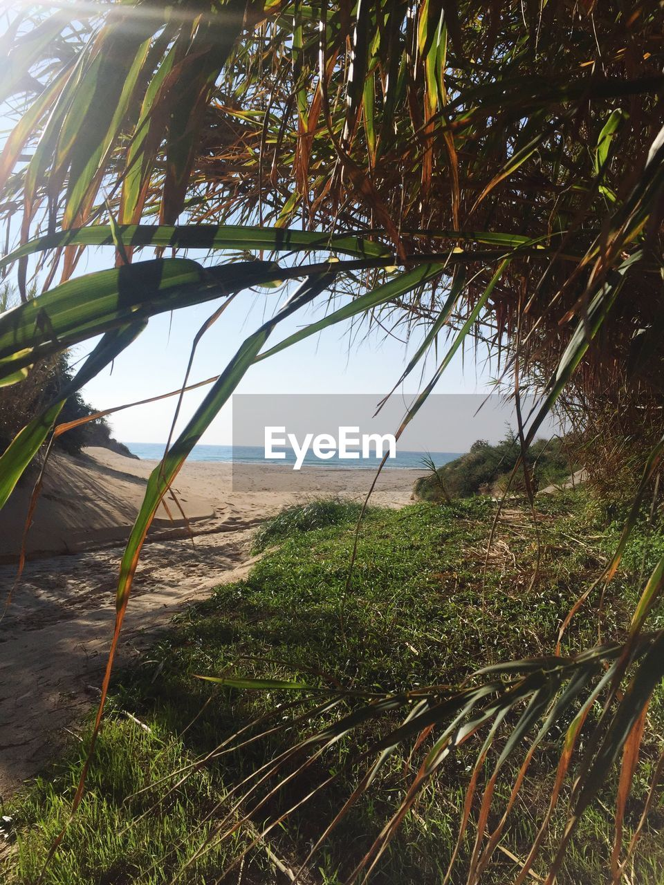 sea, tranquil scene, nature, water, grass, tranquility, growth, horizon over water, beauty in nature, scenics, day, outdoors, no people, beach, green color, plant, marram grass, tree, sky
