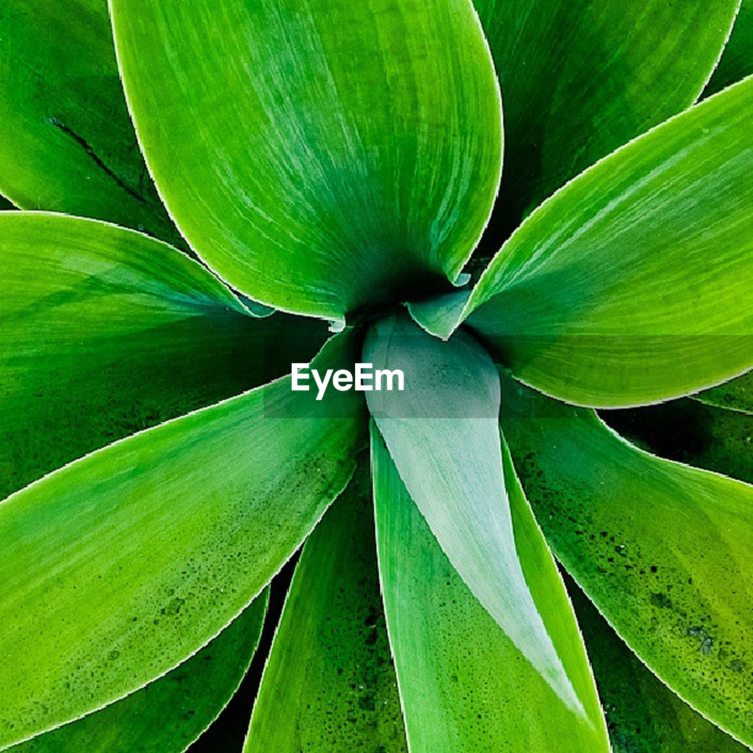 leaf, growth, freshness, green color, beauty in nature, flower, close-up, plant, nature, fragility, petal, flower head, backgrounds, leaf vein, full frame, natural pattern, green, single flower, no people, outdoors