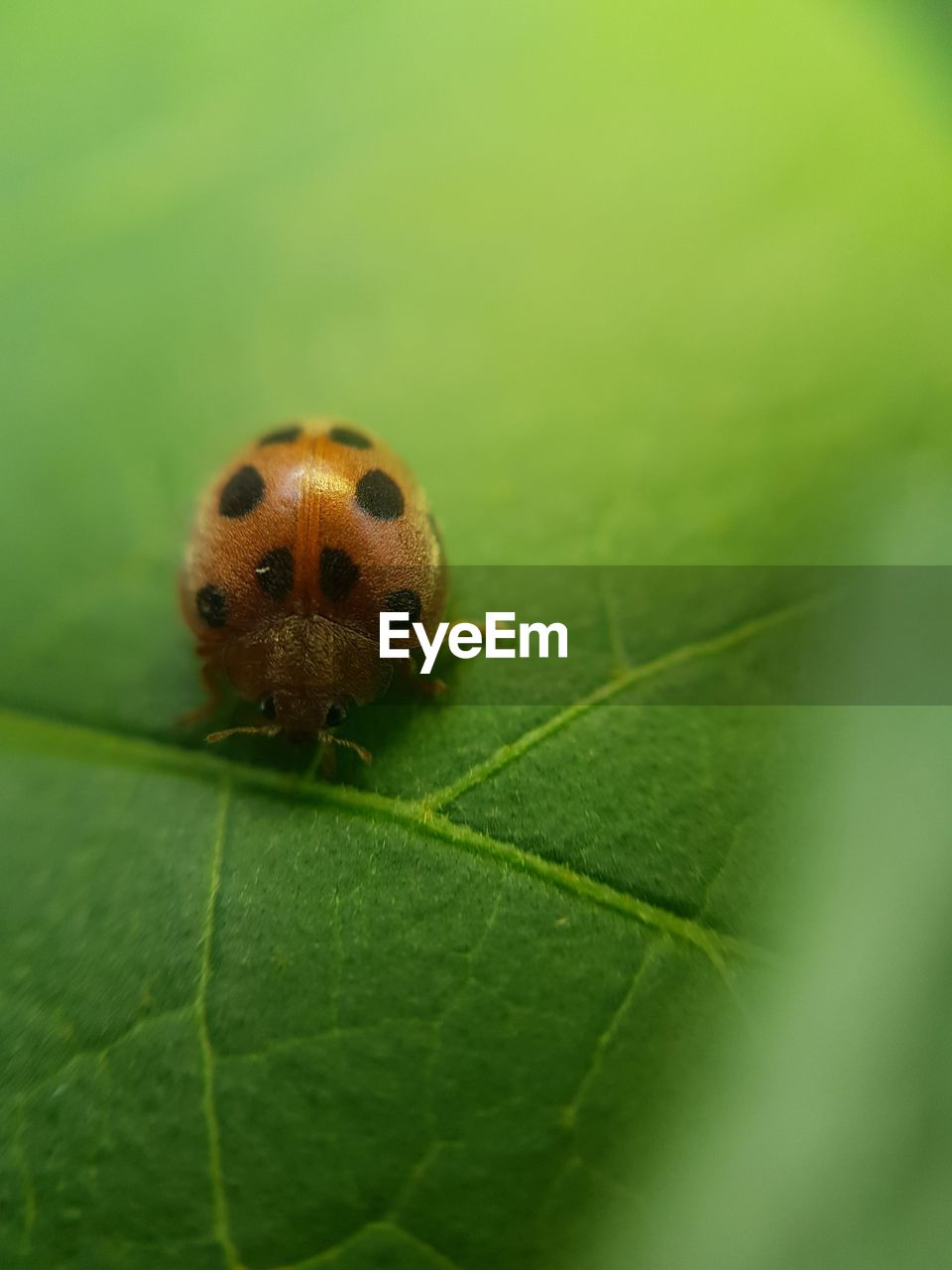 plant part, leaf, one animal, animal themes, animal, animal wildlife, animals in the wild, beetle, insect, green color, close-up, nature, invertebrate, ladybug, plant, day, no people, selective focus, outdoors, leaf vein, small