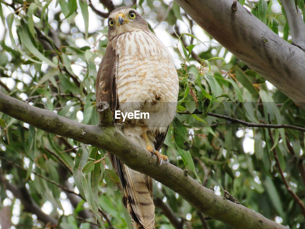 animal themes, animal, vertebrate, branch, tree, one animal, animals in the wild, bird, animal wildlife, plant, low angle view, perching, no people, bird of prey, day, nature, focus on foreground, plant part, leaf, outdoors