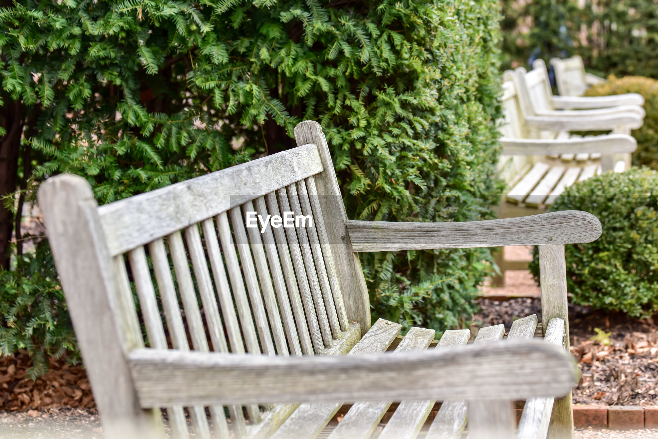 Empty bench in garden
