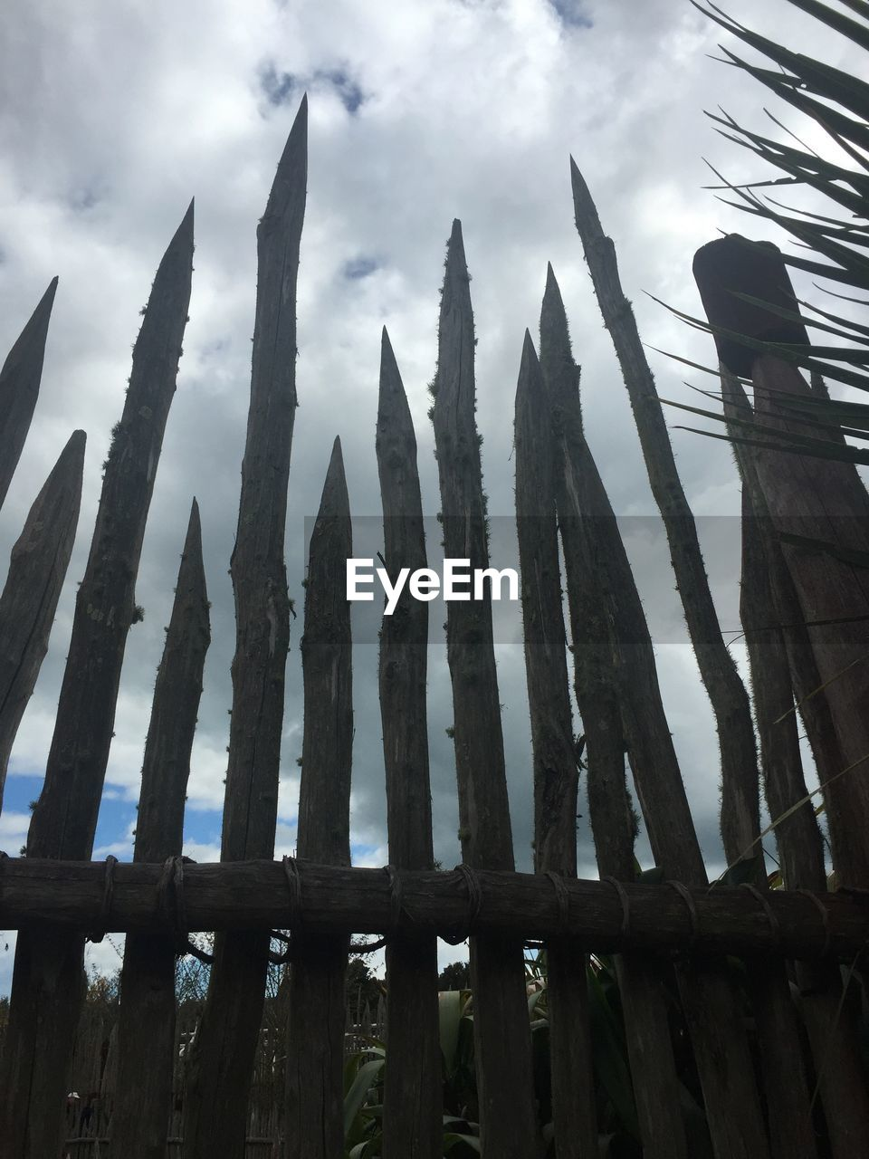 growth, low angle view, outdoors, no people, cactus, nature, sky, cloud - sky, day, beauty in nature, close-up