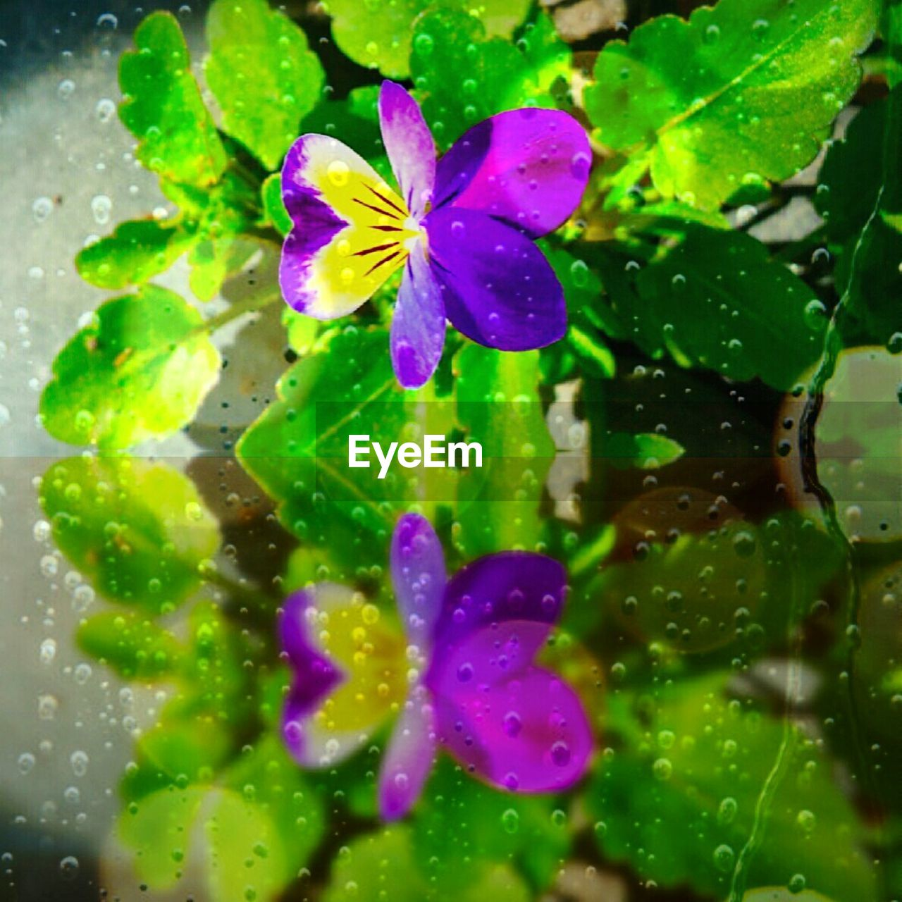 freshness, fragility, flower, green color, drop, water, wet, purple, close-up, no people, petal, beauty in nature, nature, growth, raindrop, day, flower head, outdoors