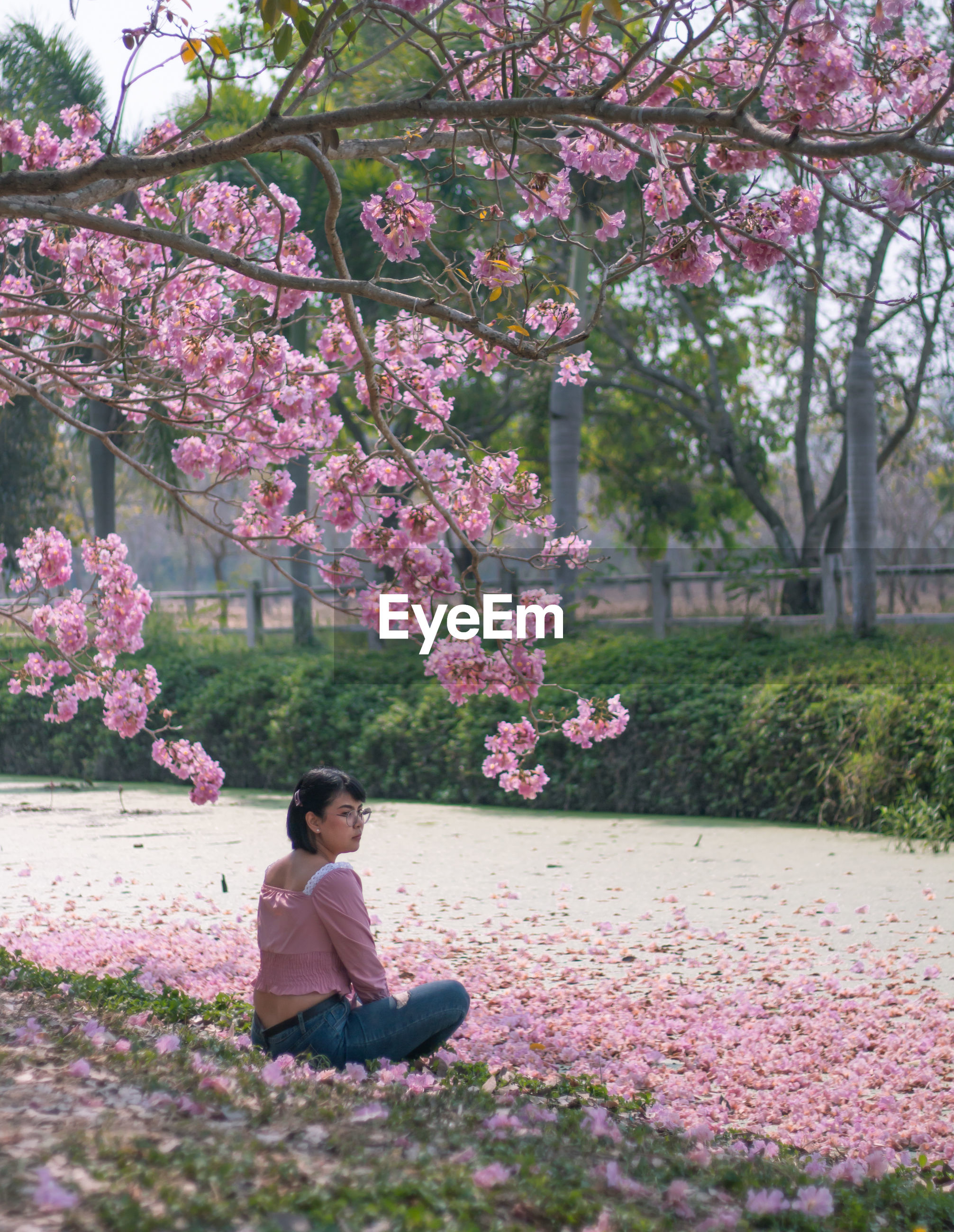 Woman sitting on cherry blossom in park