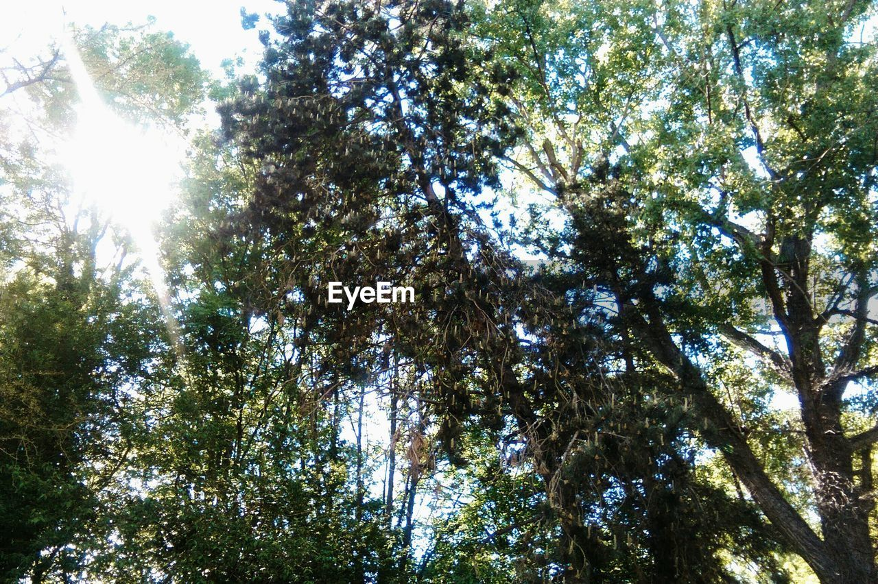 tree, growth, nature, low angle view, beauty in nature, branch, forest, no people, day, outdoors, sky
