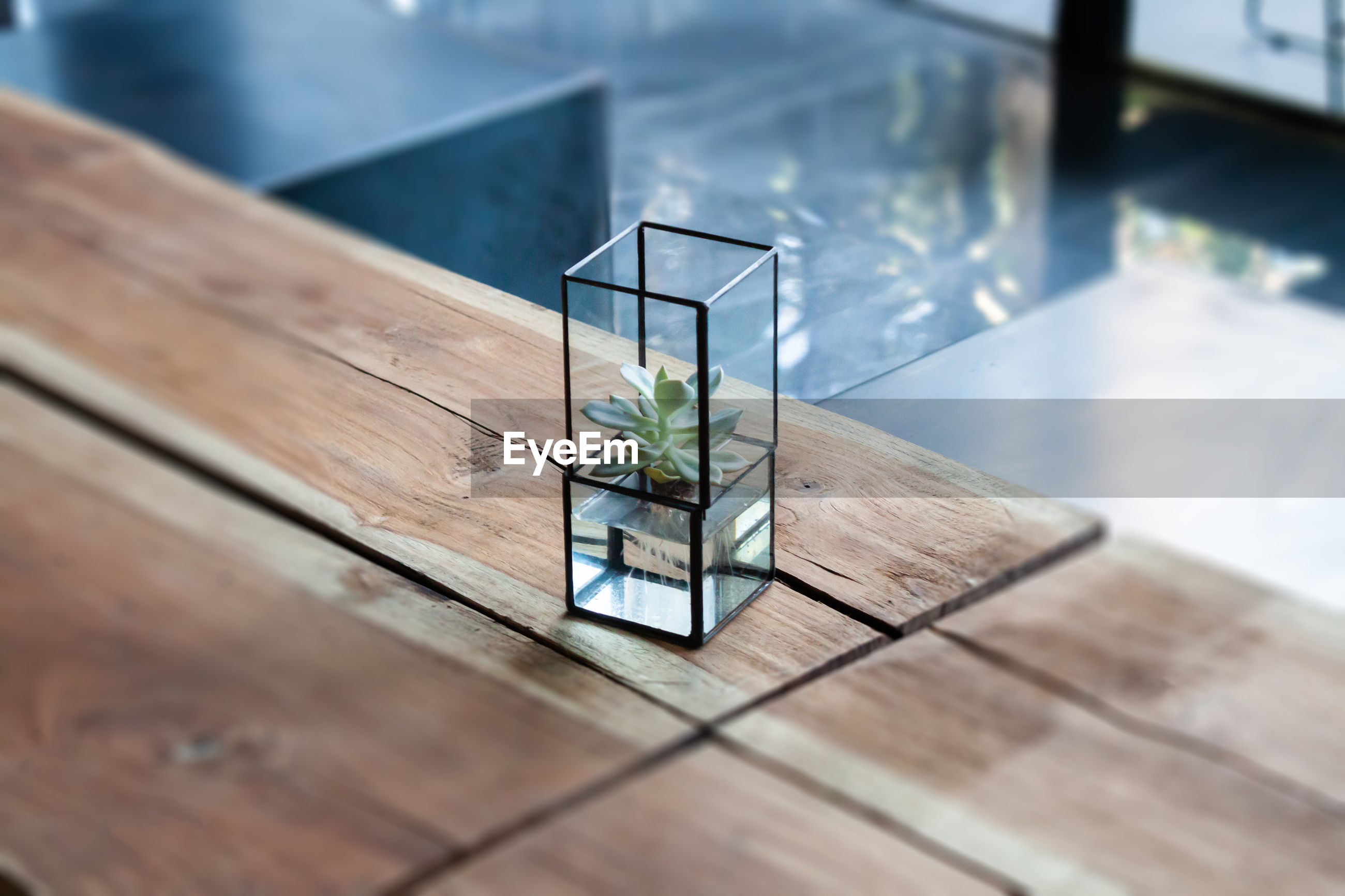 HIGH ANGLE VIEW OF POTTED PLANT ON GLASS TABLE