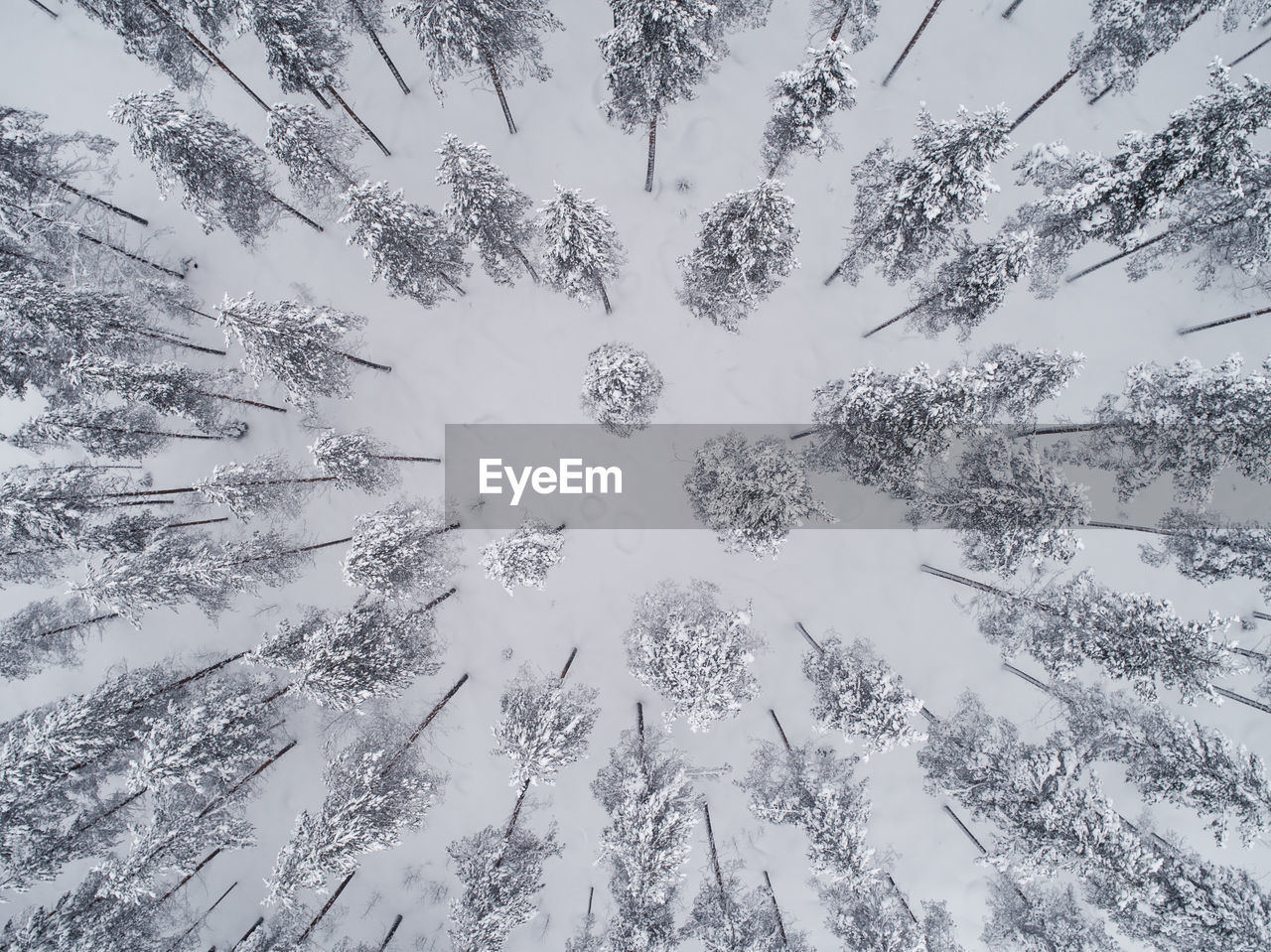 High Angle View Of Trees On Field During Winter