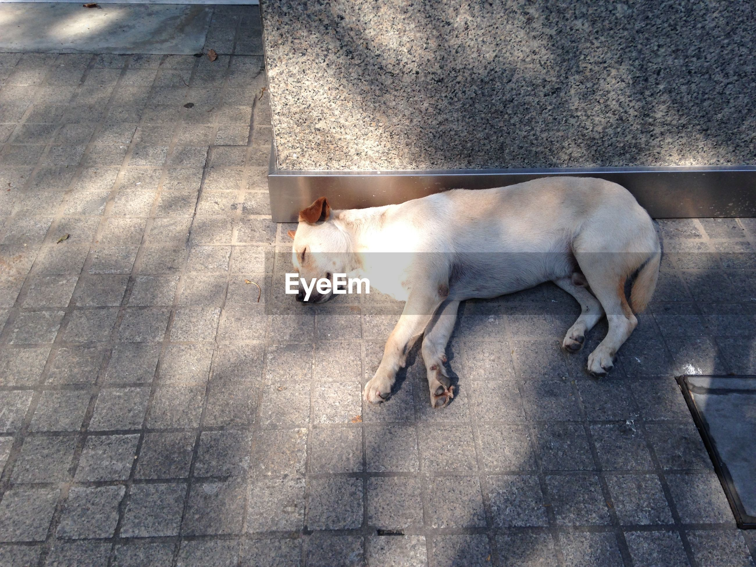 High Angle View Of Dog Sleeping On Footpath