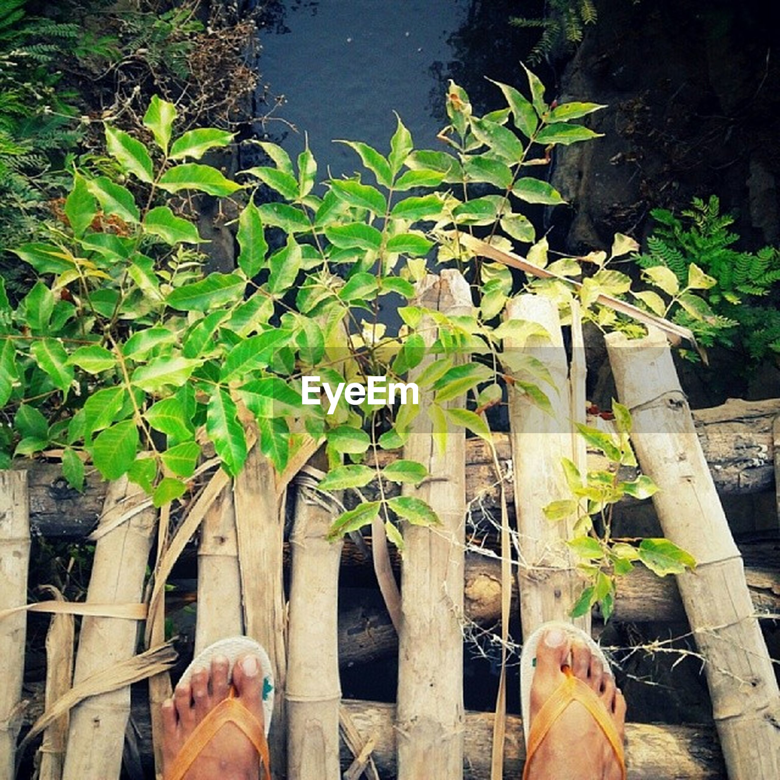 low section, wood - material, person, water, personal perspective, plant, nature, green color, growth, outdoors, high angle view, railing, day, tree, standing, men, wooden, pier