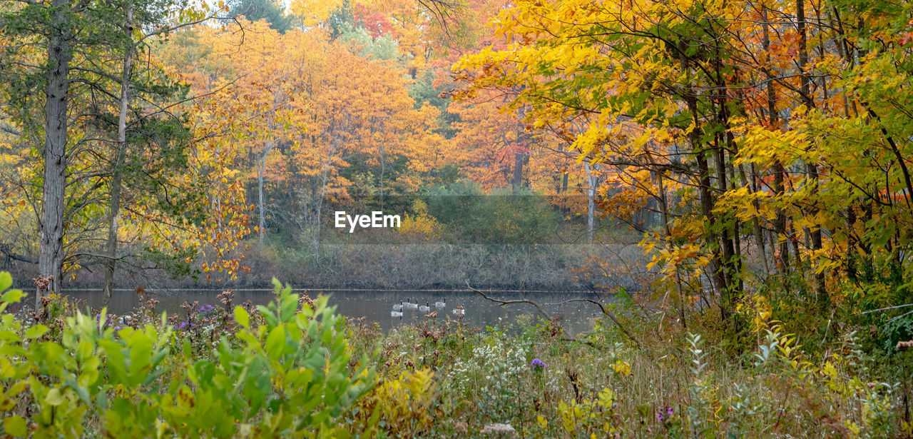 SCENIC VIEW OF AUTUMNAL TREES