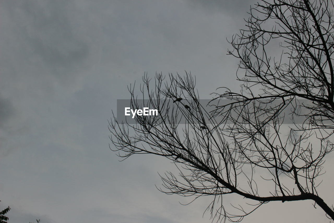 tree, sky, branch, bare tree, cloud - sky, tranquility, plant, nature, beauty in nature, low angle view, no people, silhouette, outdoors, scenics - nature, day, tranquil scene, non-urban scene, growth, dusk, focus on foreground