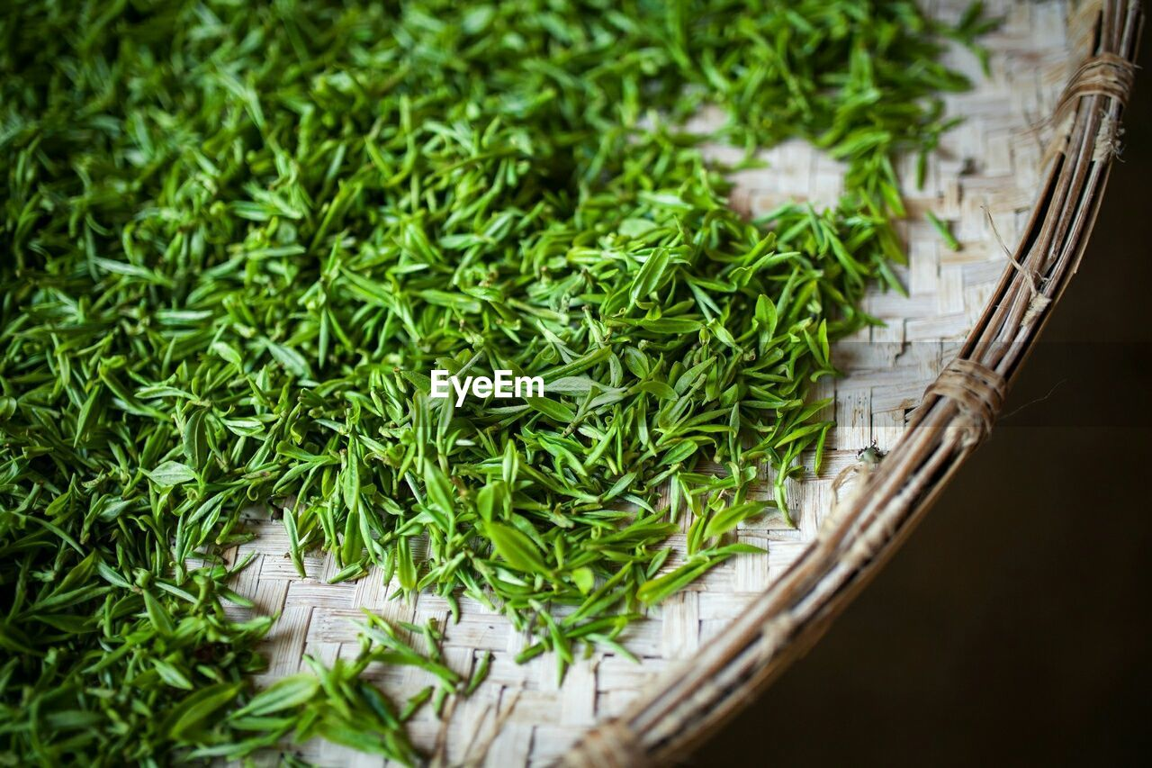 High Angle View Of Leaf Vegetable In Container