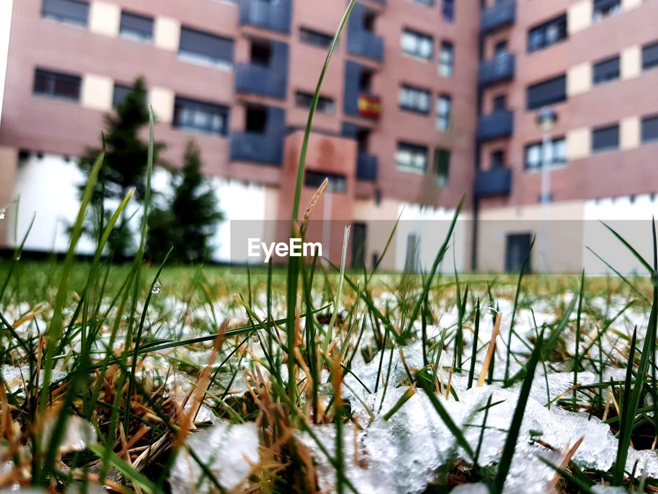 CLOSE-UP OF GRASS AGAINST BUILDINGS