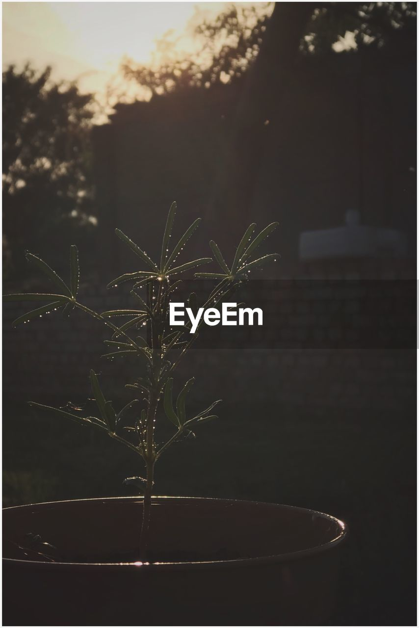 plant, growth, nature, no people, focus on foreground, close-up, plant part, leaf, potted plant, outdoors, beauty in nature, green color, day, selective focus, freshness, tree, auto post production filter, herb, fragility, flower pot, houseplant