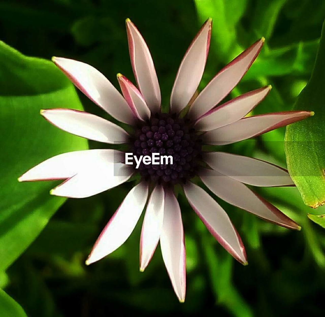 flower, fragility, petal, flower head, growth, nature, plant, freshness, day, beauty in nature, close-up, blooming, outdoors, no people, osteospermum