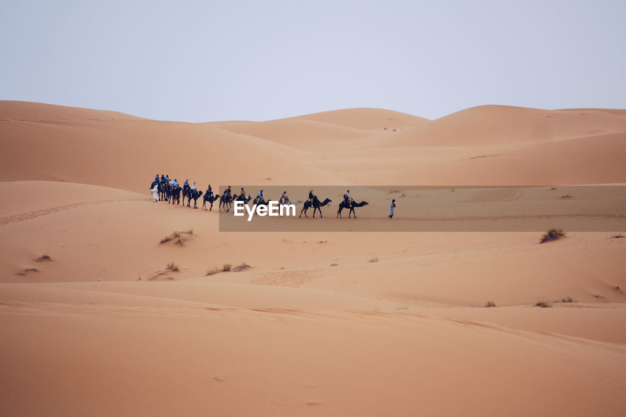 desert, sand dune, sand, land, climate, arid climate, sky, scenics - nature, group of people, environment, landscape, nature, non-urban scene, real people, extreme terrain, clear sky, camel, day, working animal, domestic animals, outdoors, riding, atmospheric