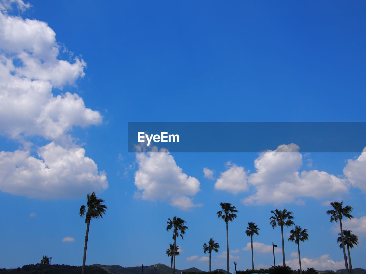 palm tree, blue, low angle view, sky, beauty in nature, tranquility, cloud - sky, nature, outdoors, tree, day, scenics, no people, tranquil scene