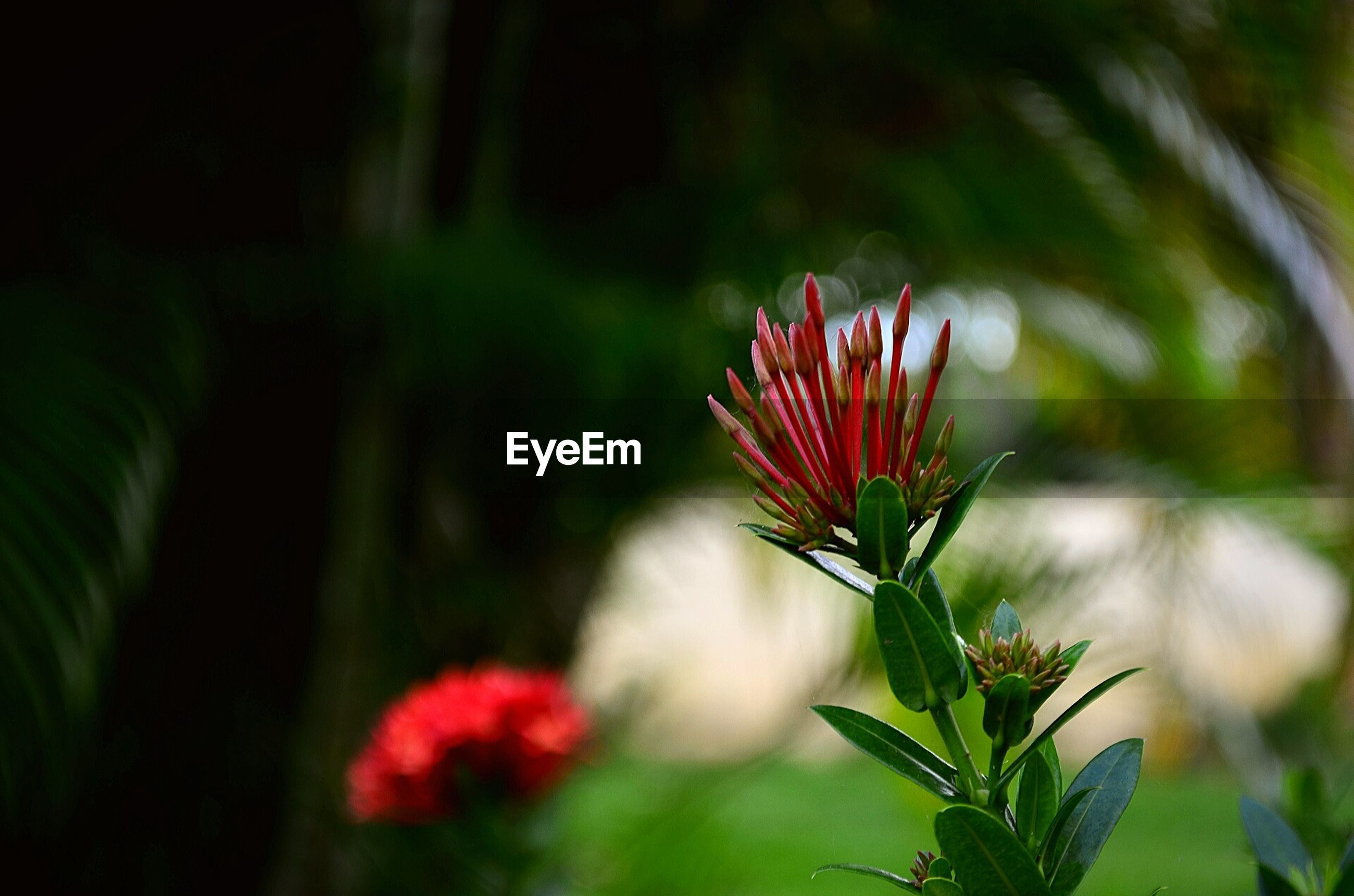 flower, freshness, growth, petal, fragility, plant, focus on foreground, beauty in nature, flower head, close-up, red, nature, blooming, stem, leaf, in bloom, selective focus, bud, botany, green color