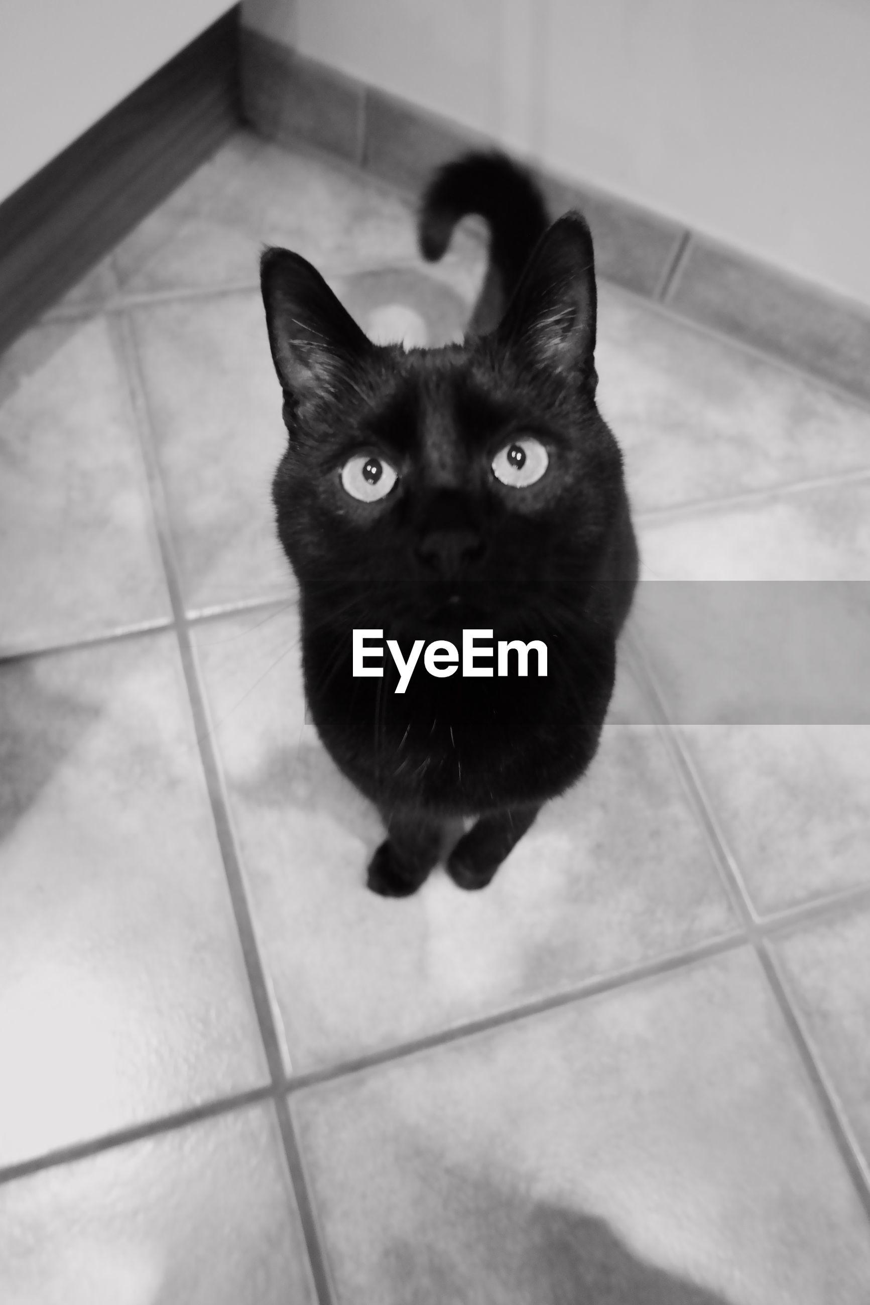 PORTRAIT OF BLACK CAT ON TILED FLOOR
