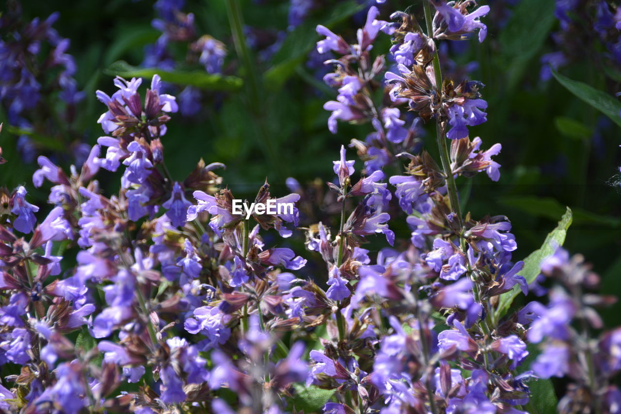 flower, flowering plant, vulnerability, fragility, plant, purple, growth, beauty in nature, animal themes, invertebrate, insect, freshness, animals in the wild, animal, animal wildlife, petal, close-up, one animal, bee, nature, no people, flower head, lavender, pollination