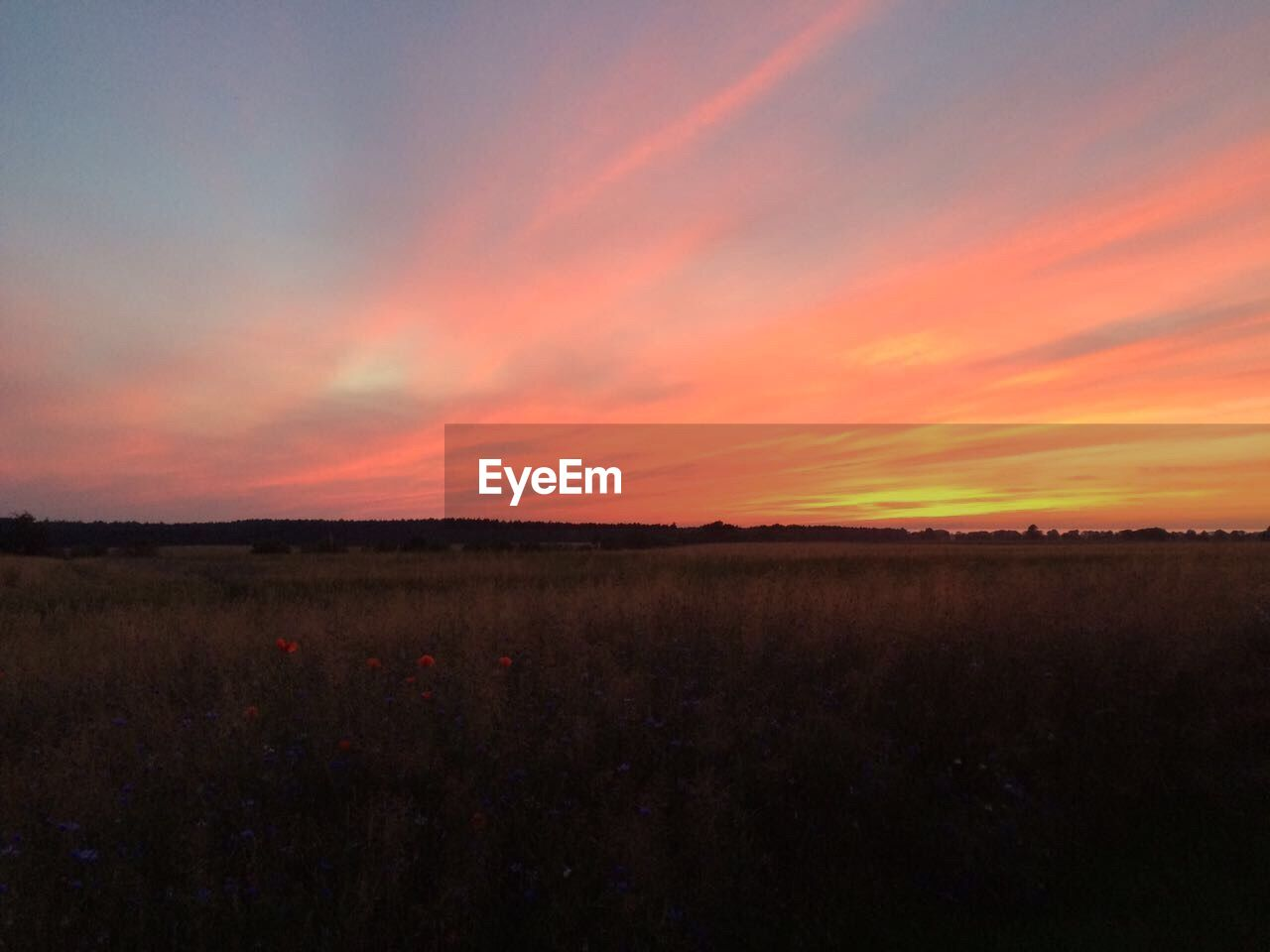 landscape, nature, field, sunset, scenics, beauty in nature, tranquility, tranquil scene, no people, sky, agriculture, rural scene, outdoors, growth, day