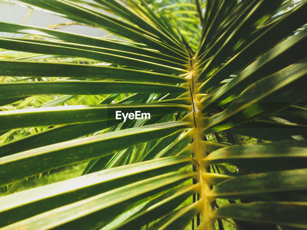 growth, leaf, nature, green color, plant, close-up, palm tree, day, frond, beauty in nature, tree, no people, outdoors, freshness
