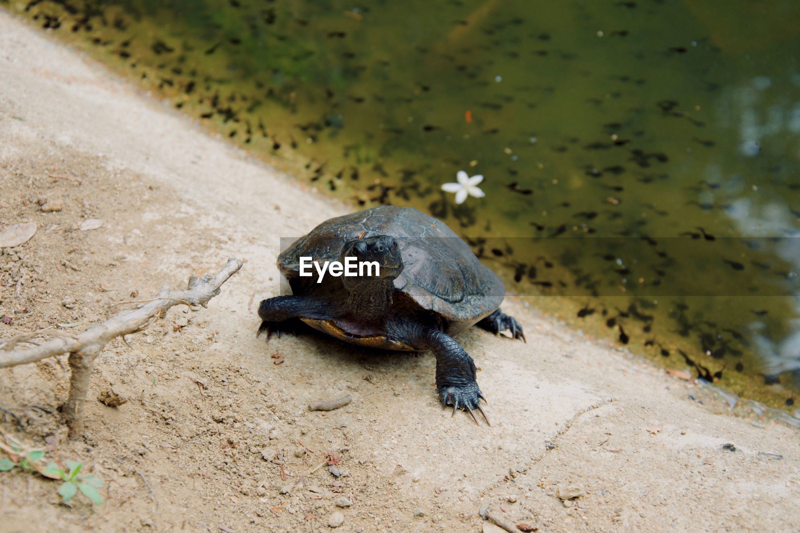 HIGH ANGLE VIEW OF A TURTLE IN WATER