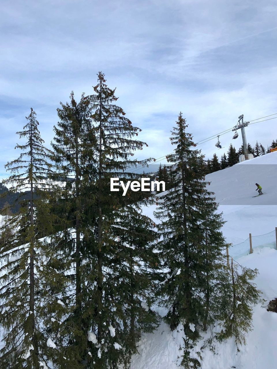 cold temperature, snow, winter, tree, plant, sky, nature, beauty in nature, tranquility, tranquil scene, covering, land, scenics - nature, cloud - sky, no people, growth, day, mountain, non-urban scene, coniferous tree, outdoors, pine tree, snowcapped mountain
