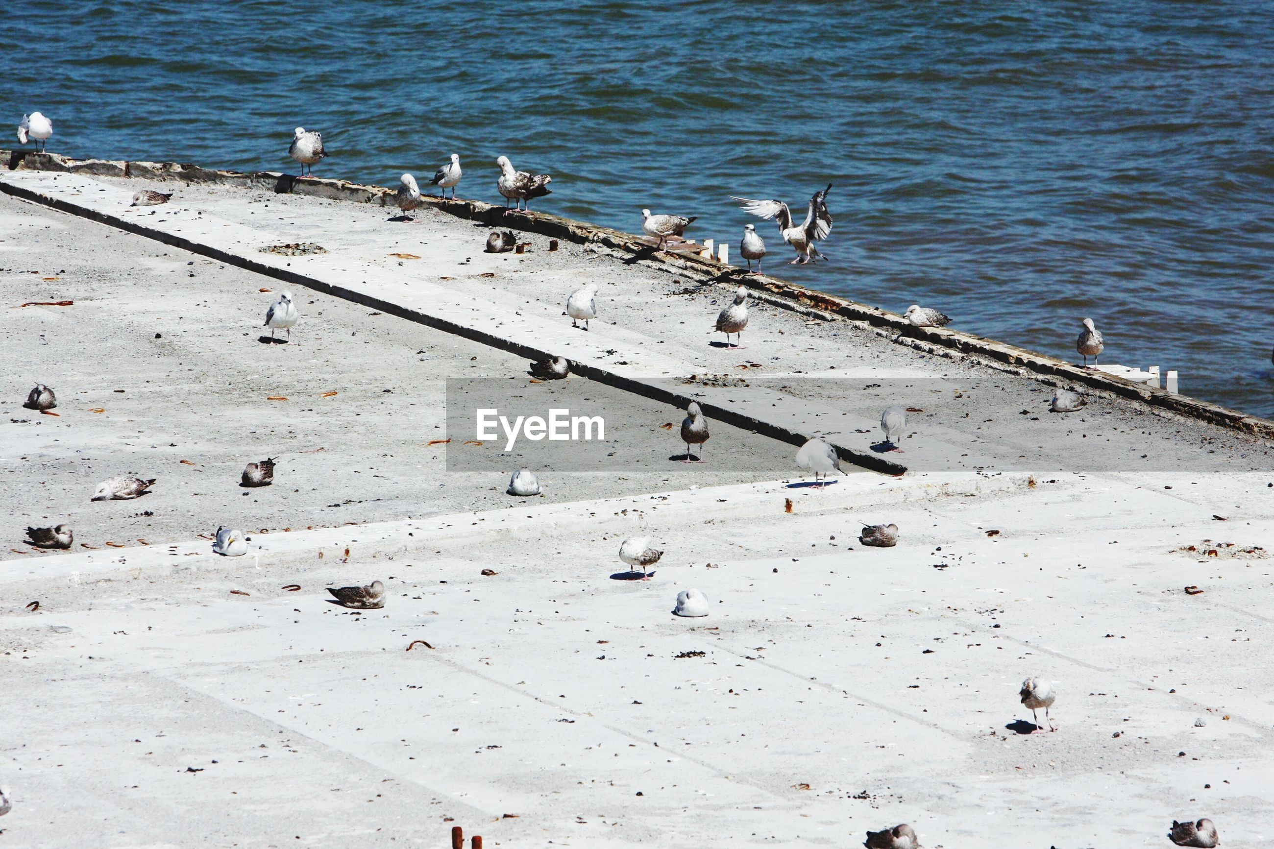 High angle view of birds by sea