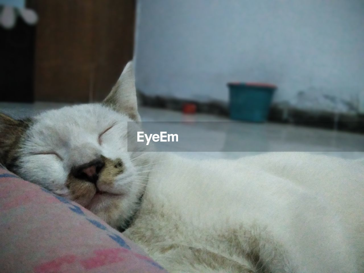 cat, domestic cat, domestic, pets, domestic animals, mammal, one animal, feline, animal themes, animal, relaxation, vertebrate, resting, sleeping, no people, eyes closed, indoors, lying down, close-up, focus on foreground, whisker, animal head, napping